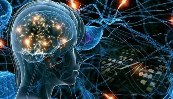 Le cerveau et réseau de neurones