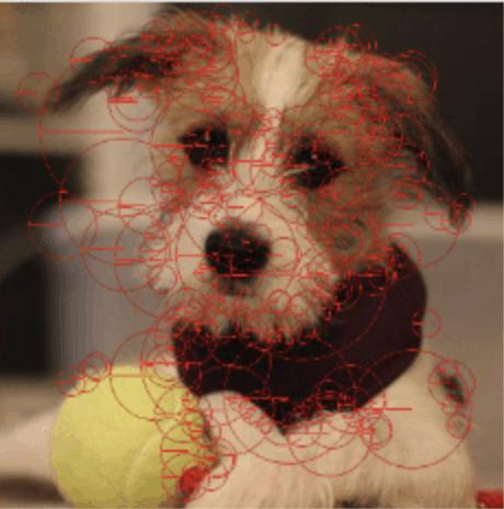 image chien 3